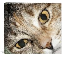 Close up Cat Eyes, Canvas Print