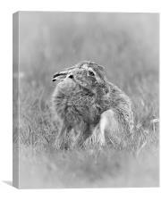 A hares breath, Canvas Print