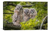 The three wise Owls