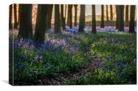 Deep in the Bluebell wood, Canvas Print