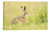 Hare comes Summer, Canvas Print