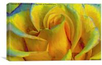 painted yellow rose, Canvas Print