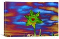 Crazy Daffodil, Canvas Print