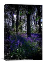 bluebells at dusk, Canvas Print