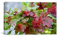 Berries., Canvas Print