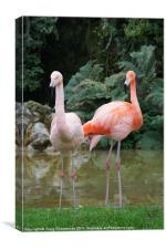 Pink Flamingo's
