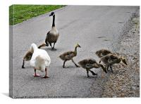 Geese Crossing, Canvas Print
