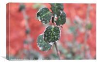 Macro Leaf drops