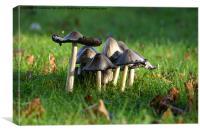 Mushroom Moot, Canvas Print