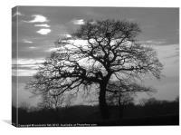 B&W TREE SILHOUETTE, Canvas Print