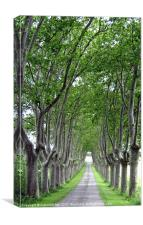 FRENCH COUNTRY LANE, Canvas Print