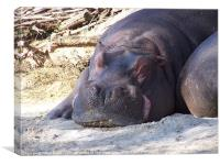 Sleeping Hippo, Canvas Print