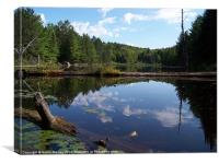 Beaver Pond in Algonquin Park, Canada, Canvas Print