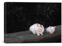 Cats on a log, Canvas Print