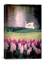 Two Swans, Canvas Print