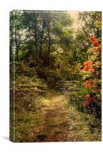 Flower walk, Canvas Print