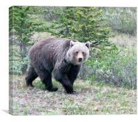 bear, Canvas Print