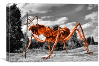 MASSIVE ORANGE ANT, Canvas Print