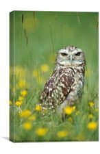 BURROWING OWL, Canvas Print