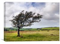 DARTMOOR TREE, Canvas Print