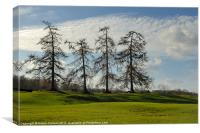 LARCHES AT VERULAMIUM, Canvas Print