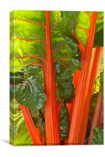 SWISS CHARD, Canvas Print
