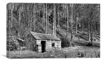BOTHY, Canvas Print