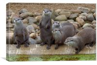 ROW OF OTTERS, Canvas Print