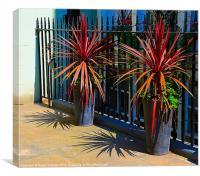 PALMS, Canvas Print