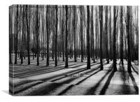 BARCODE TREES                                    , Canvas Print