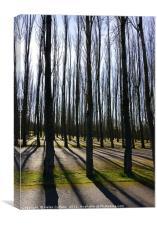 LIGHT THROUGH THE TREES                           , Canvas Print
