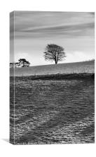 Tree on the Skyline                               , Canvas Print