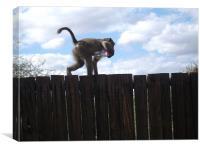 Cheeky Monkey, Canvas Print