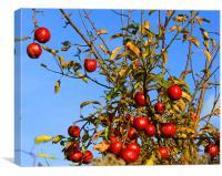November apples