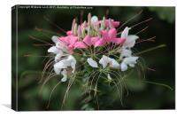 Nature's Bouquet, Canvas Print