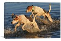 Hounds in the Water