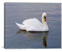 Vain Swan, Canvas Print