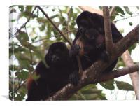monkey family, Canvas Print