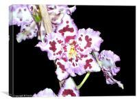 Purple  Orchid Flower, Canvas Print