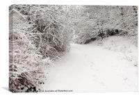 Winter Walkway, Canvas Print