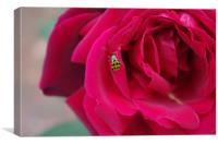 Green Ladybug, Canvas Print
