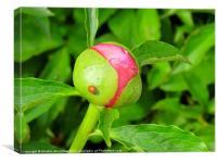 Ladybug Rose, Canvas Print