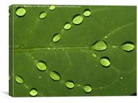 Water on Leaf, Canvas Print