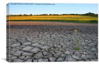 Drought?, Canvas Print
