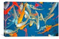 japanese fish, Canvas Print