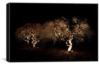 Acer at night, Canvas Print