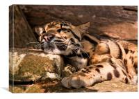 Clouded Leopard, Canvas Print