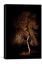 Tree at night, Canvas Print