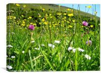 Meadow Flowers, Swaledale, Canvas Print