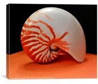 Nautilus Sea Shell, Canvas Print